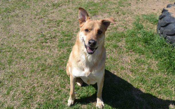 Share This Pet: Help Logan Find a Home